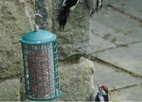 Woodpeckers – the new stone masons by Steven Marchant